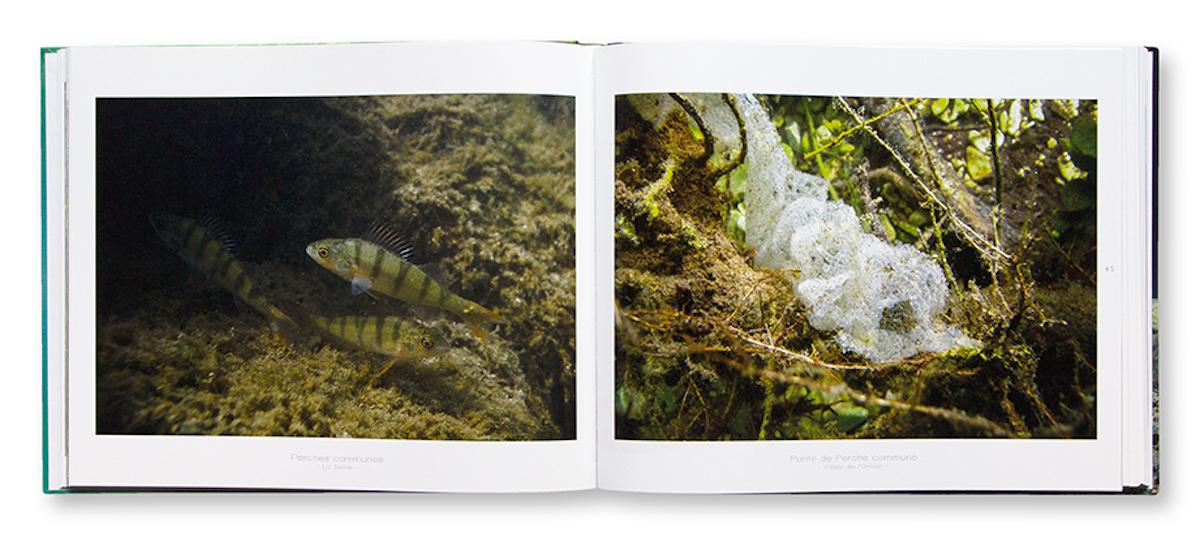 Sous la surface, rencontres au coeur de nos eaux douces, Anne-Cécile Monnier, Reflets d'eau douce, intérieur