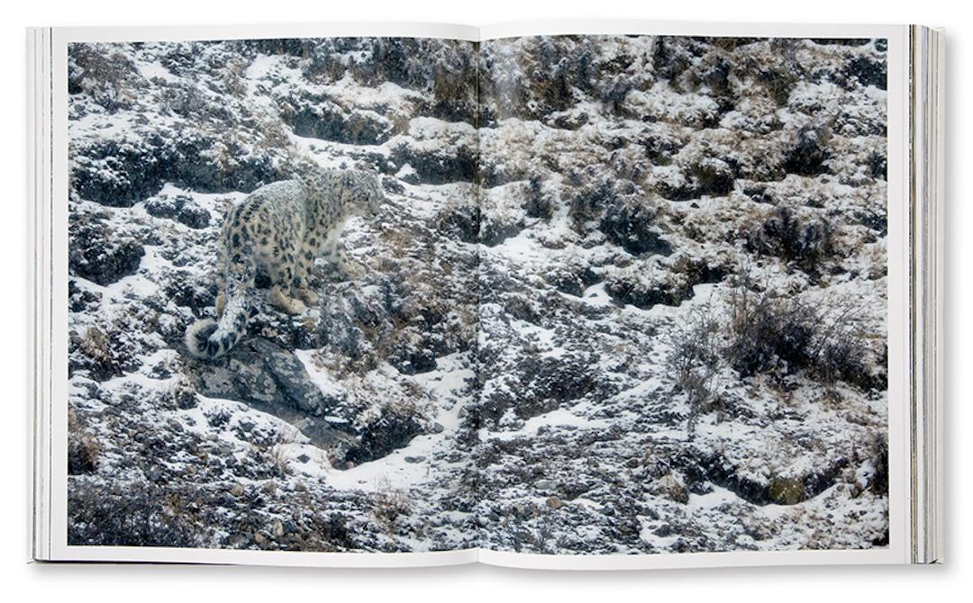 Tibet, en harmonie avec la Panthère des neiges, Frédéric Larrey, intérieur
